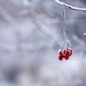 kristamonique frozen